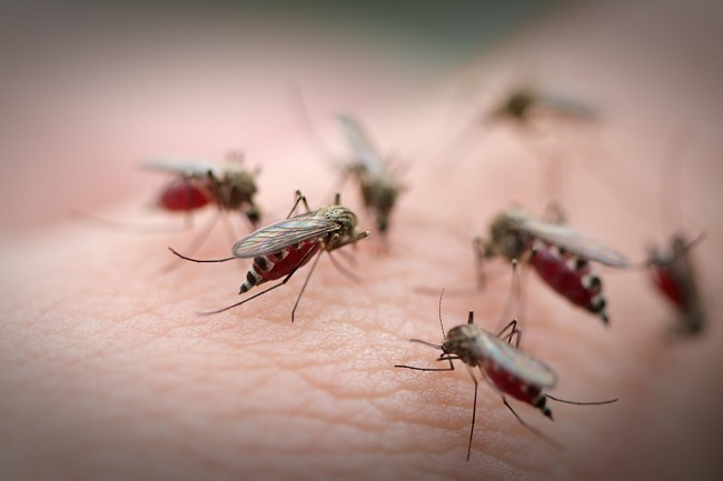 Muỗi là nguyên nhân gây ra một số bệnh truyền nhiễm nguy hiểm ở người